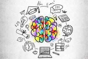 cerebro educación